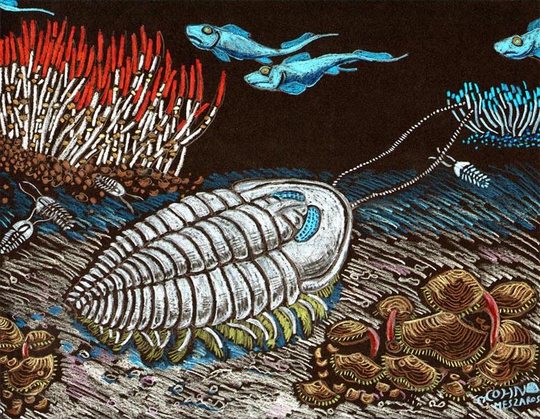 Olenidae trilogite